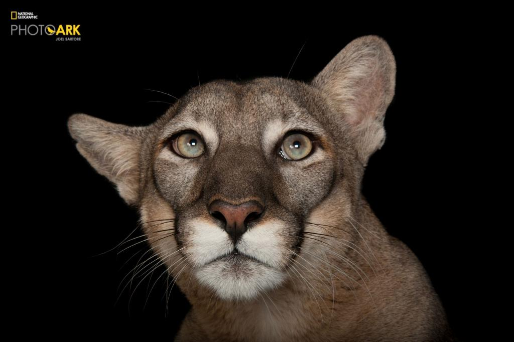 Fot. Joel Sartore/National Geographic Photo Ark/natgeophotoark.org