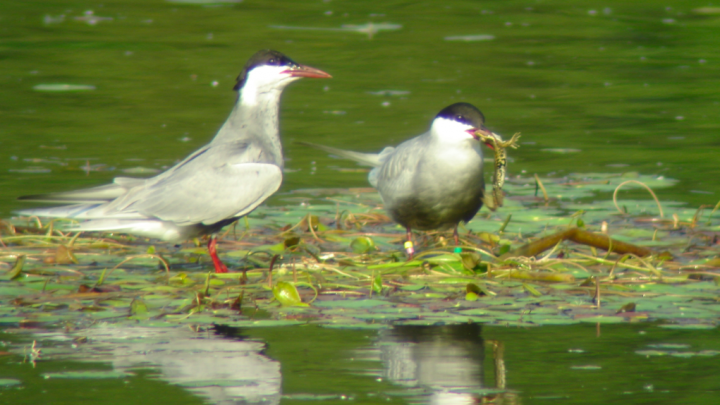 Male and female - with food. Photo by M. Ledwoń