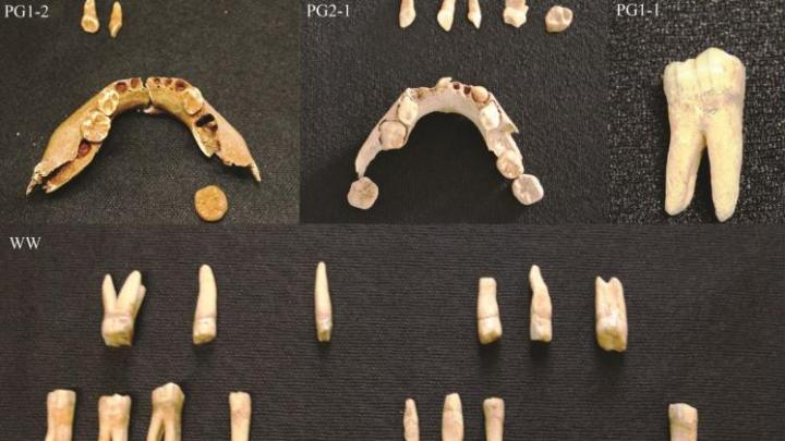 Mesolithic remains from north-eastern Poland, credit: J. Tomczyk
