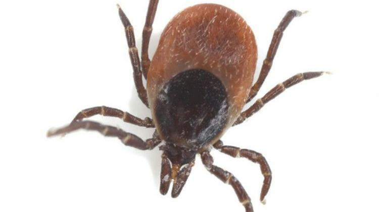 Pure evil? Tick sometimes gets eaten and has parasites too