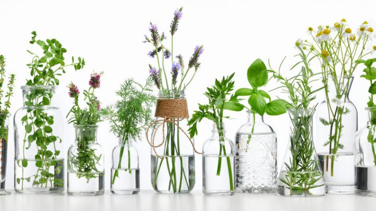 Expert: Herbal medicine works as a supportive therapy ...