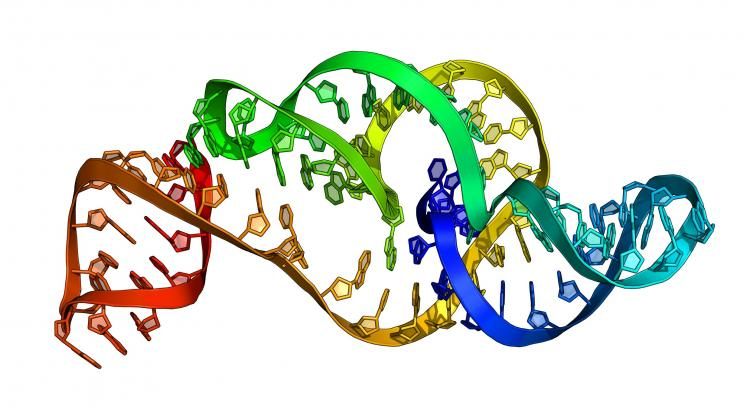 The 3D structure model of the Zika virus RNA generated by RNAComposer on the basis of a sequence. Currently, this structure is already determined experimentally and deposited in the PDB database. Source: Marta Szachniuk
