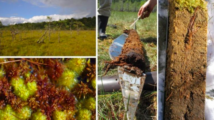 From left to right: photo of a bog, mosses and peat moss, and geological samples taken from the bog. It shows how peat bogs accumulate organic matter. Source: Prof. Mariusz Lamentowicz
