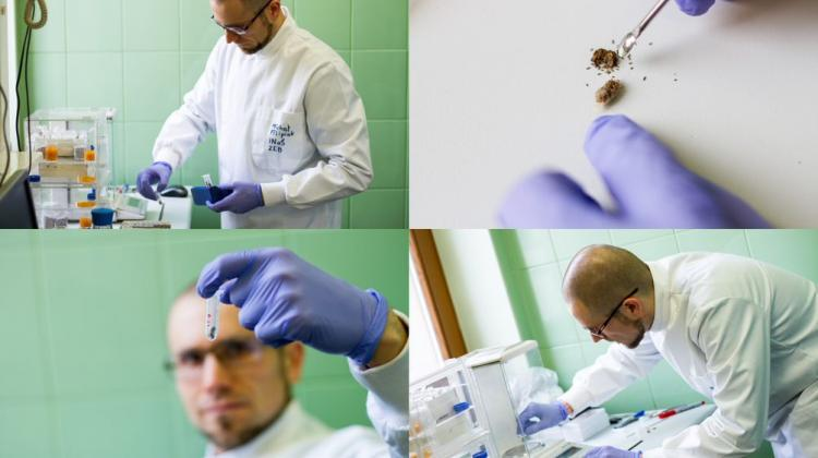 Dr. Michał Filipiak from the Jagiellonian University uses ecological stoichiometry methods to investigate which plants can negatively affect the development of bee larvae. Photo: Paweł Dudzik