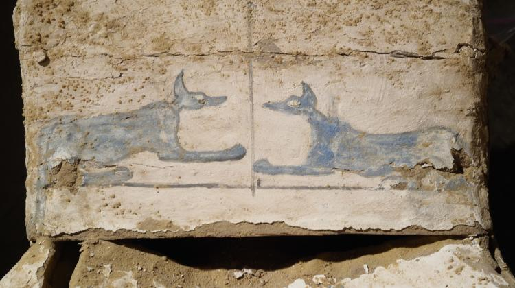 Depictions of Blue Anubis  on the base of the coffins. Photo: J. Dąbrowski / PCMA