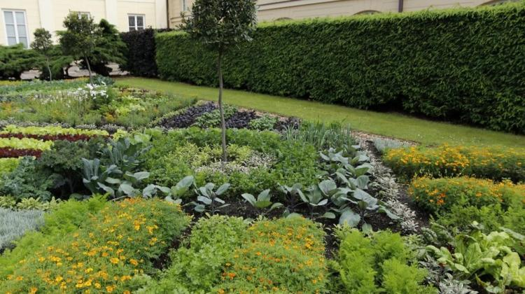 Vegetable carpet in the University of Warsaw Botanic Garden, credit: the University of Warsaw Botanical Garden