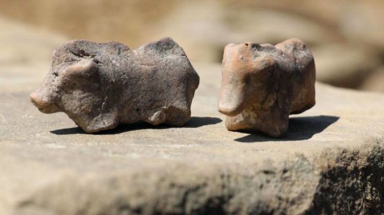 Presentation of the archaeological find in the form of 3.5 thousand years old pig figurines, August 13th, Maszkowice (Małopolska). This is quite a rare find. The settlement where the discovery was made is surrounded by a stone wall, which is unique for settlements from this period in this part of Europe. (kf) PAP/Grzegorz Momot 13.08.2020